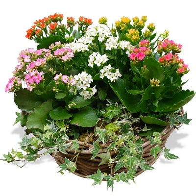 Flowers lebanon send flower to lebanon florist beirut for Plantes vertes